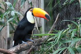 An exotic Mccaw bird